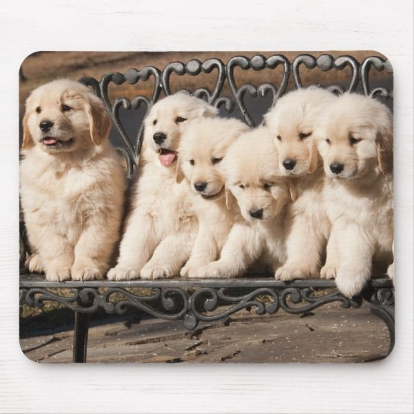 Golden Retriever Puppies Mouse Pad Zazzle Com Retriever Puppy