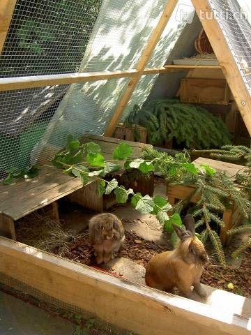 Rabbit guinea pig enclosure Kleintieraus in Zurich to buy – tutti.ch – Kaninchen