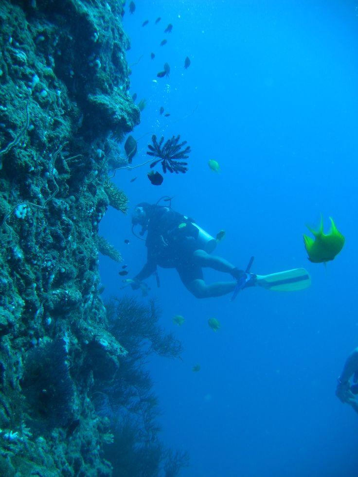Scuba Diving the Fiji Islands   #LuxuryTravel #Travel #Wedding #Honeymoon #Vacation #Fiji #VentureFiji