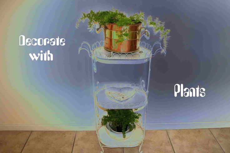 Decorate Your Home Using Plants - News - Bubblews