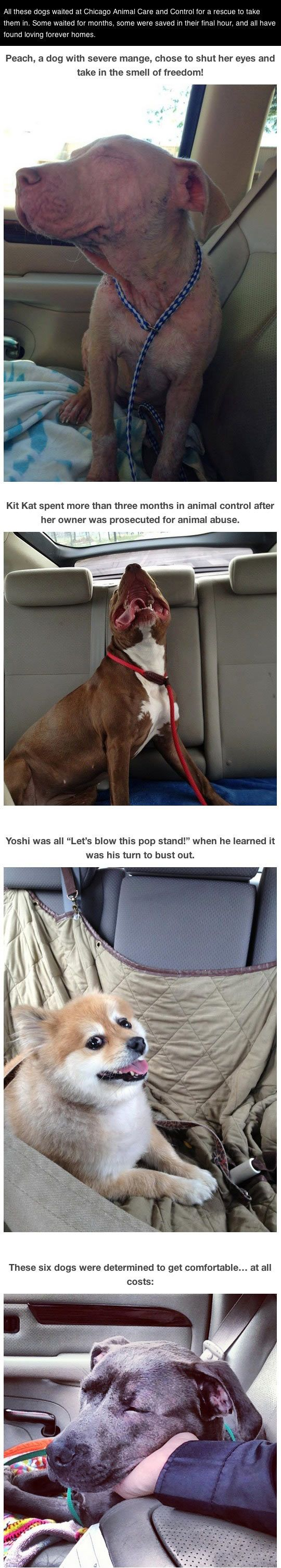 Photos of dogs taken after leaving the shelter and getting in the car�