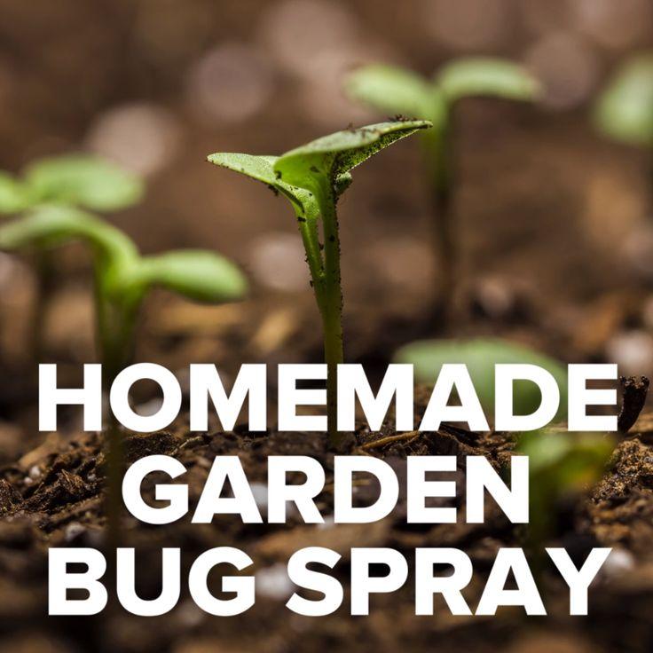 DIY Garden Bug Spray #gardening #bugs #plants #spray #homemade
