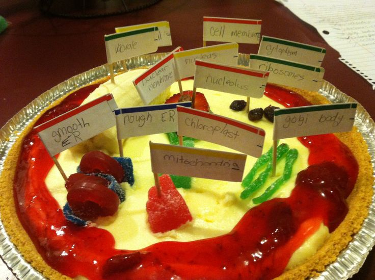 Kasi's 3d plant cell made out of a cheese cake( cytoplasm), banana (vacuole), strawberry (nucleus), milk dud (nucleolus), chewy life savers (smooth er),  raisins (ribosomes) , fruit chews (mitochondria & chloroplast), sour strips (rough er, Golgi body, nuclear membrane), fruit topping (cell membrane), graham cracker crust (cell wall)