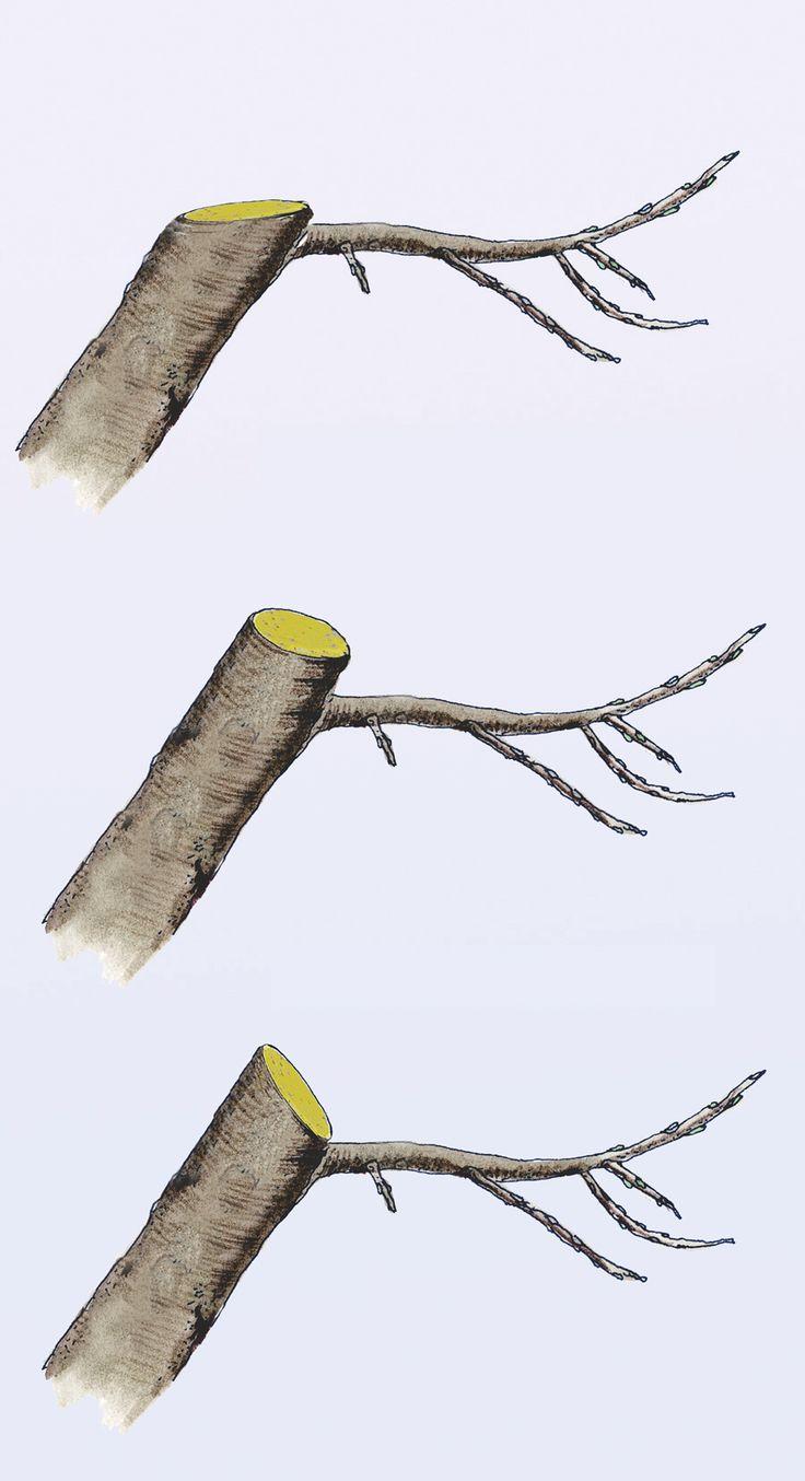 apfelbaum schneiden gardening apfelb ume schneiden apfelbaum und baum. Black Bedroom Furniture Sets. Home Design Ideas
