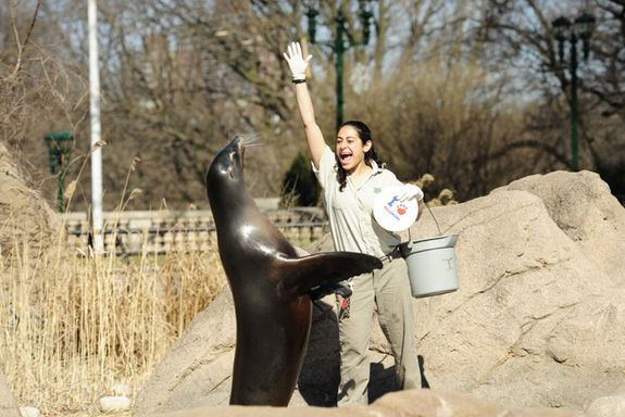girl zoo keeper jobs - Google Search