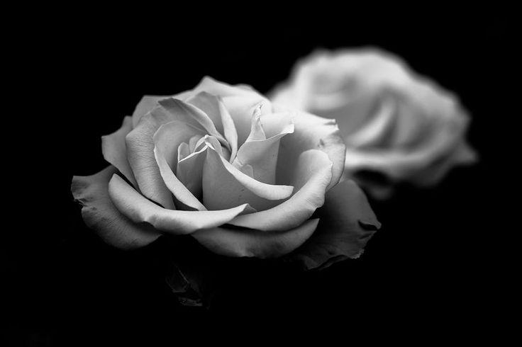 Wild Roses by Kai Bergmann on 500px
