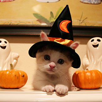 Cat in witch costume for halloween