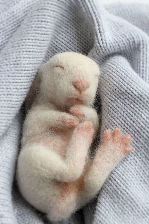 Needle felted baby bunny by Yvonne Herbst. Yvonne's Workshop on etsy and Facebook!