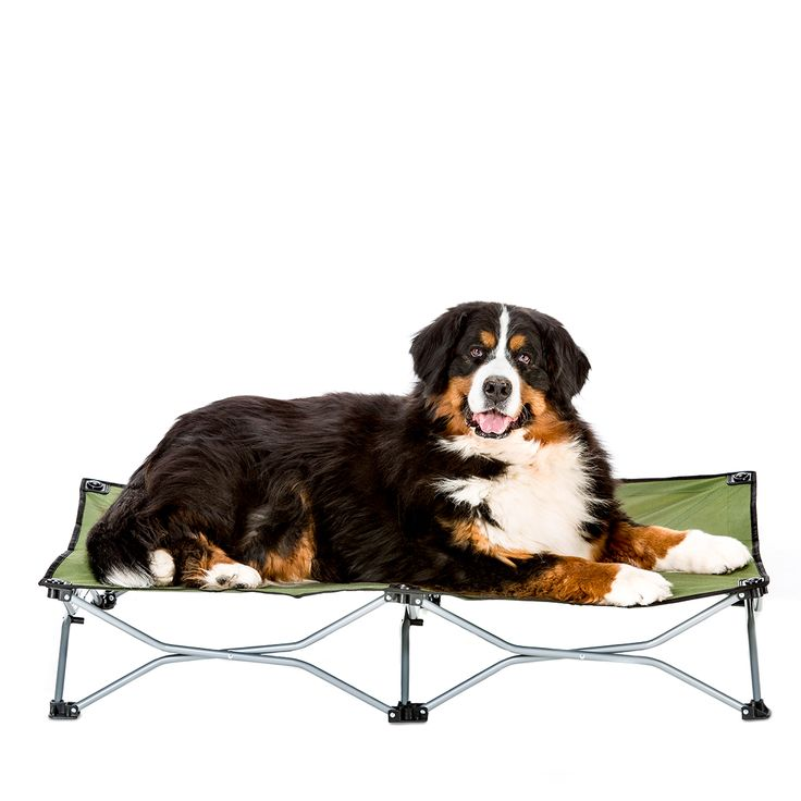Carlson Large Portable Dog Cot   Green  Fold And Go