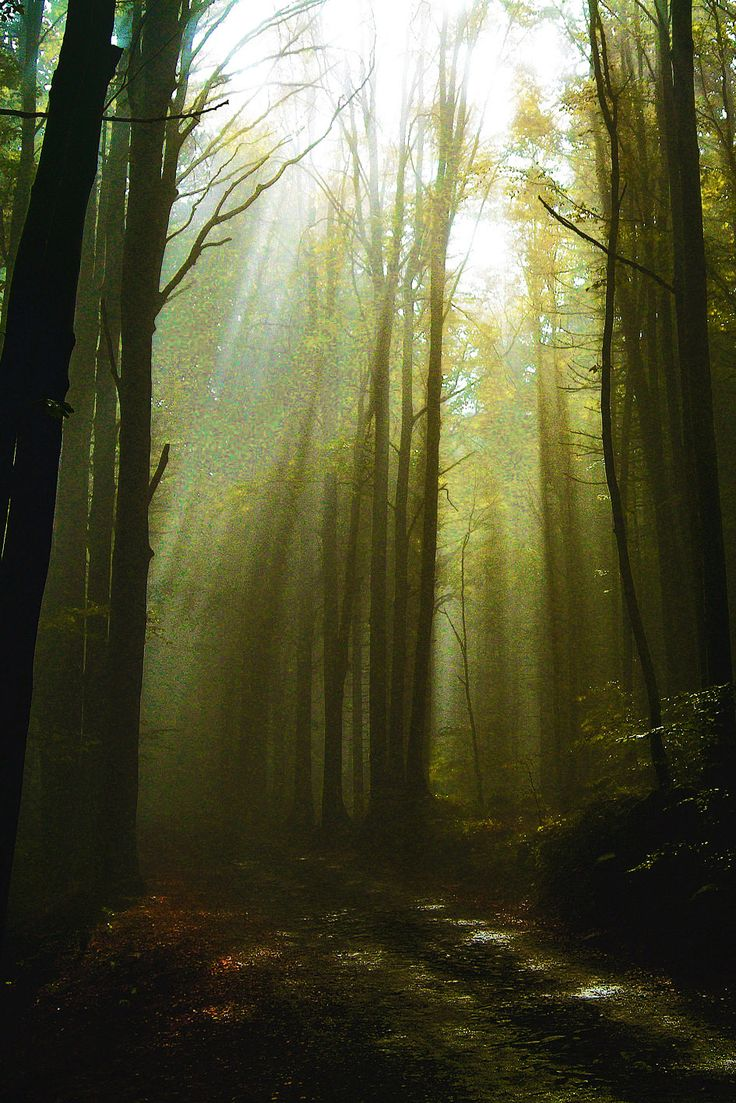 High Val Parma Forest  -  The Lagoni The forest