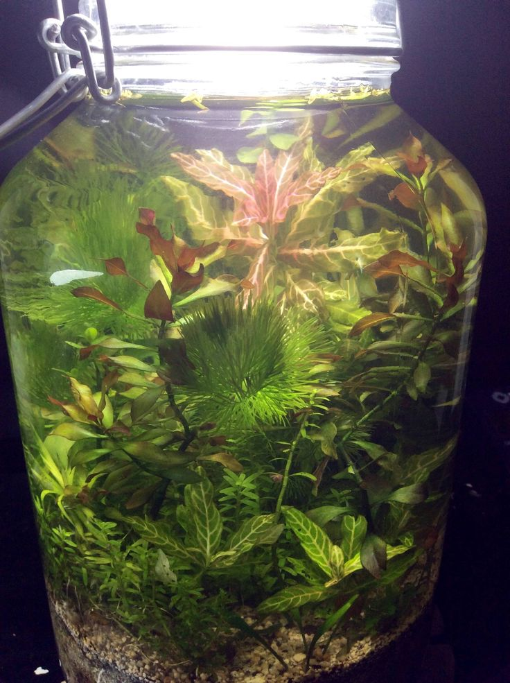 410 best nano aquascaping with freshwater snails images on for Fish tank snails