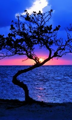 Though this tree is crooked.....this tree is still magnicent...when set to a gorgeous background of a beautiful colored sky