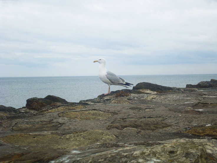 It was photographed in St.Andrews. A seagull was overlooking the sea.