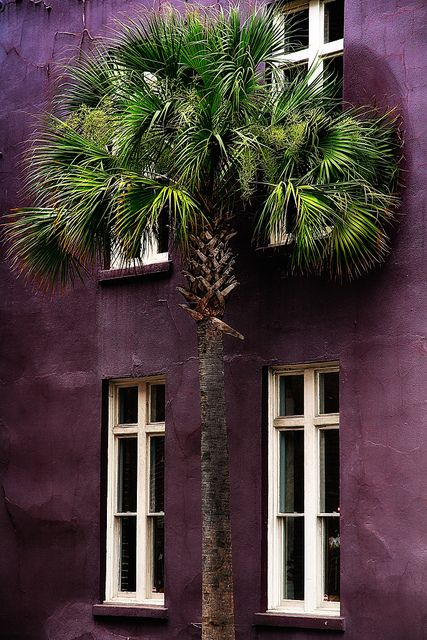 Charleston Style, South Carolina | by Andrej Milas, via Flickr THE COLOR