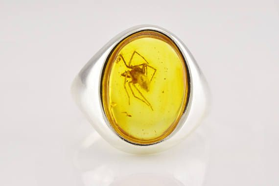 VERY LARGE SPIDER Fossil Insect Inclusion Natural Baltic Amber