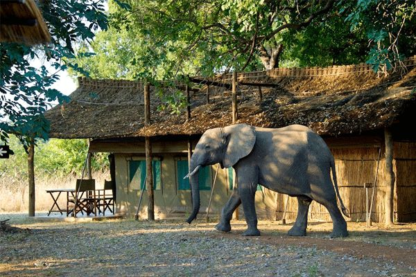 CANT WAIT! Flatdogs Camp in South Luangwa National Park, Zambia