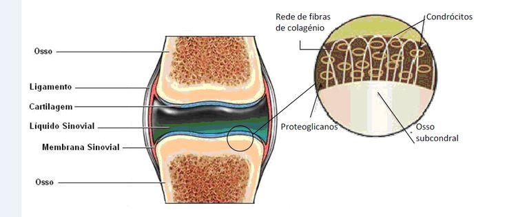 Colagénio_na_cartilagem_do_joelho melhorsaude.org melhor blog de saude