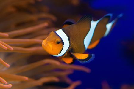 Finding.... Nemo Photo by Giovanni Giuliani — National Geographic Your Shot