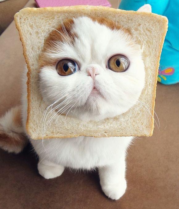 Hello. I am bread.