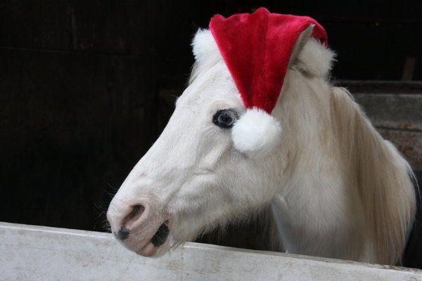 hores    christmas    Christmas Horse