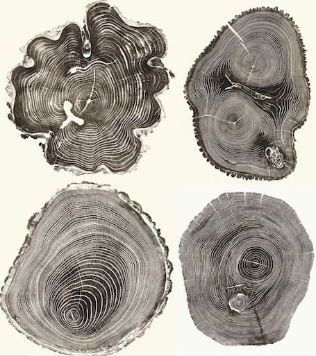 tutorial old growth tree print - Google Search