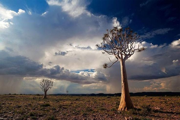 #DailyEscape: Sunset over the quiver trees. Did you know that the quiver trees that grow in the #Namib are actually a type of aloe?