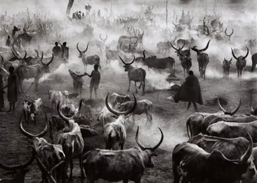 Sebastiao Salgado. Southern Sudan [Dinka cattle camp of Amak at the end of the day when the herd is back in the camp for the night. This is the most active time in the camp], 2006