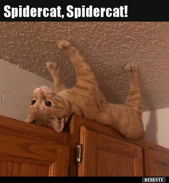 Spidercat, Spidercat!.. | Lustige Bilder, Sprüche, Witze, echt lustig – Celina Ludwig