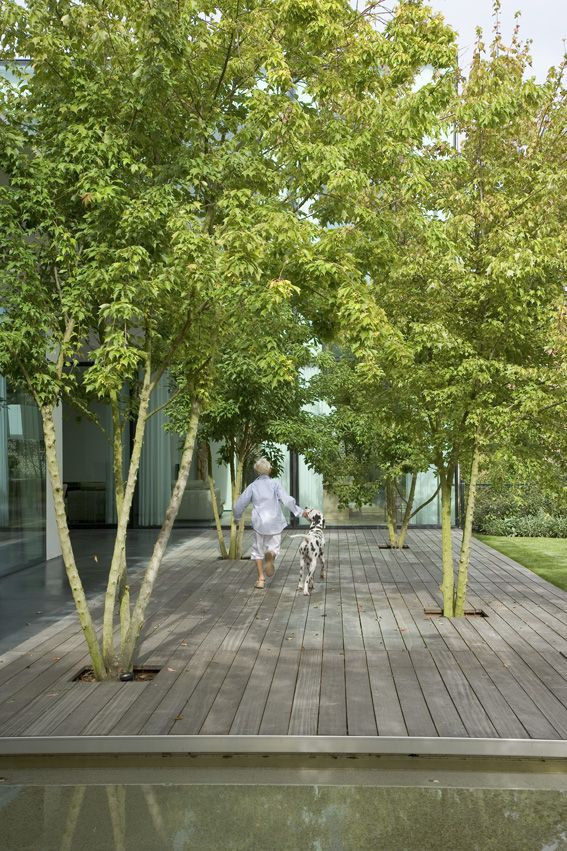 Wooden decking with multi-stemed trees built in