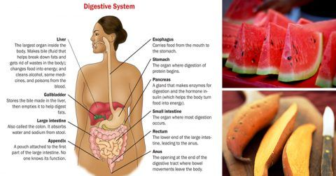 Image of 62 Foods For Digestive Health High In Magnesium, Iron, Zinc and B Vitamins