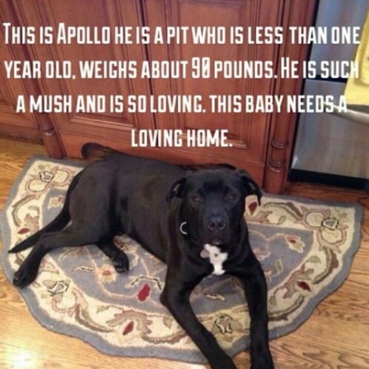 You Re Amazing Animals: 1000+ Images About Adopt A Pup, Change A Life On Pinterest