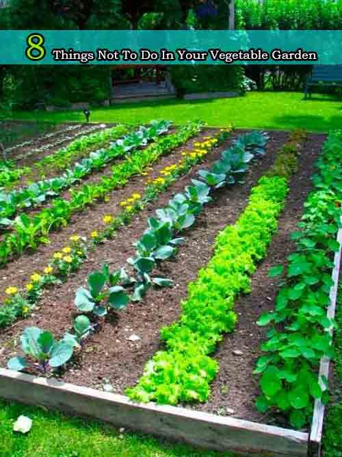 8 Things Not To Do In Your Vegetable Garden