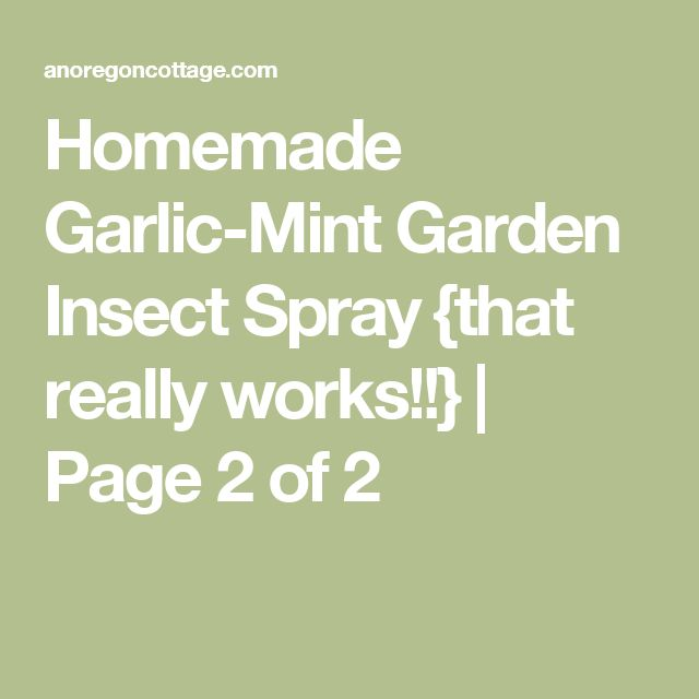 Homemade Garlic-Mint Garden Insect Spray {that really works!!} | Page 2 of 2