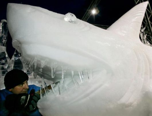 sculture di ghiaccio animali - Cerca con Google