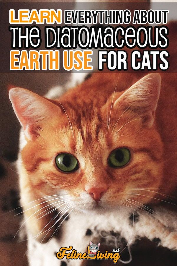 Pin By Nikki Lane On Pet Cares In 2020 Cats Diatomaceous Earth Domestic Cat