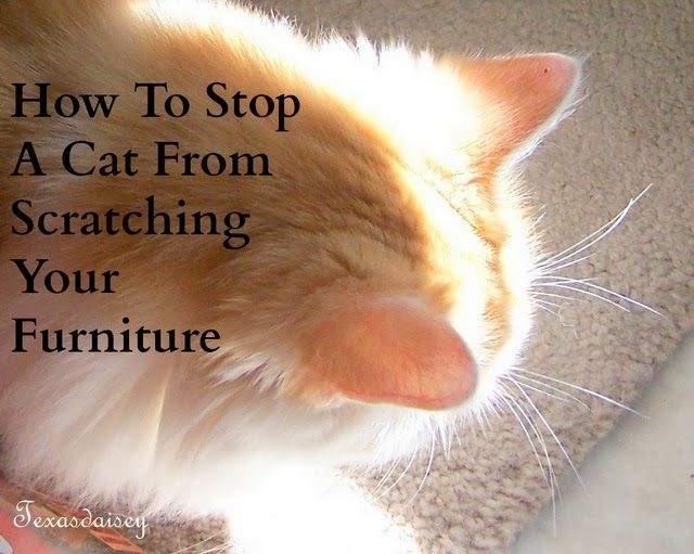 Texasdaisey Creations How To Stop A Cat From Scratching The Furniture 3 In My Series Of Articles About How To Cat Training Cat Care Cat Training Scratching