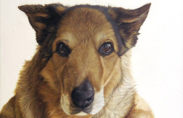 Fine Art and You: Ester Curini | Italian Animal Painter