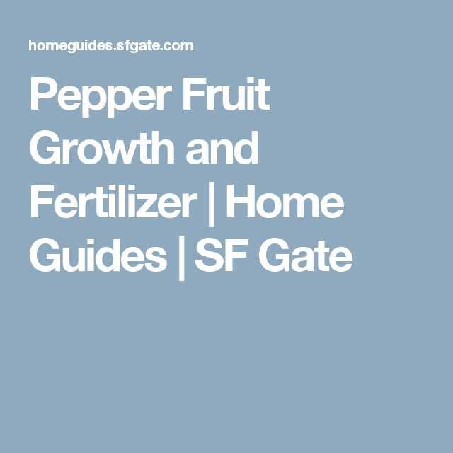 Pepper Fruit Growth And Fertilizer Stuffed Peppers 400 x 300