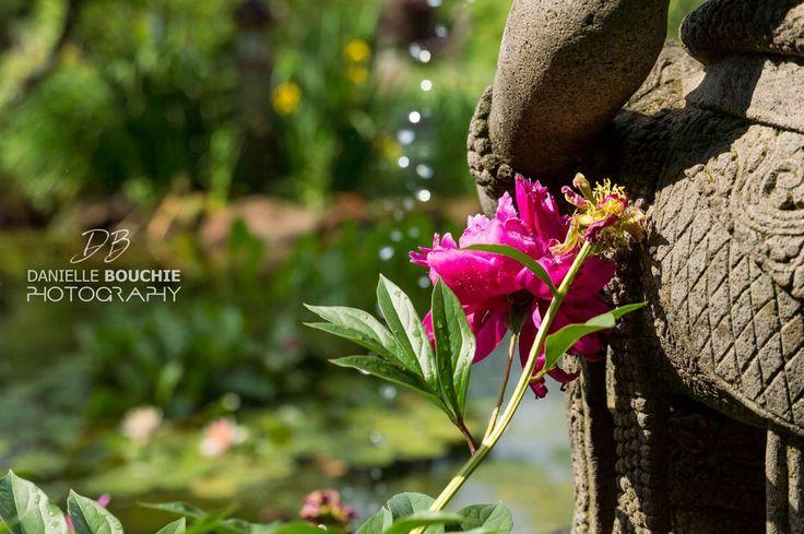Dunes Gallery Garden in Prince Edward Island https://www.facebook.com/daniellebouchiephotography/