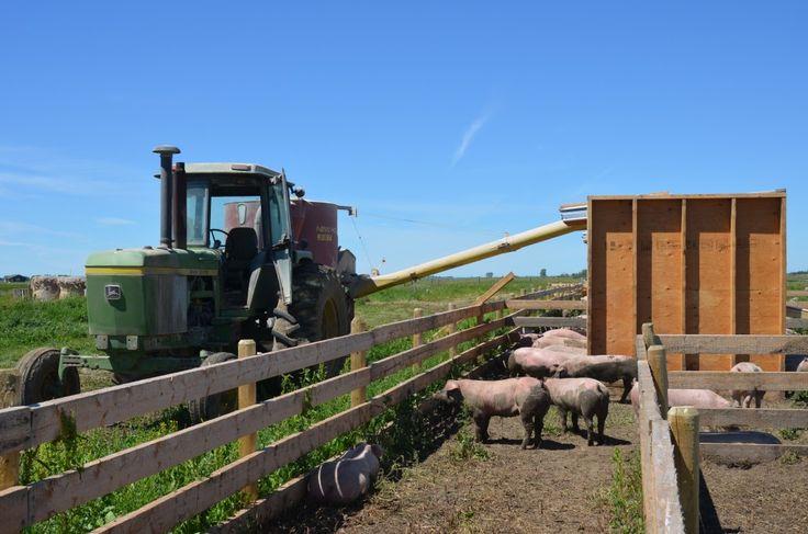 5 Reasons We Love Being an Alberta Farm Family http://www.spraggsmeatshop.com/5-reasons-we-love-being-an-alberta-farm-family/ #freerangepork