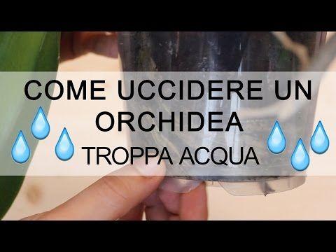 Come uccidere un Orchidea - troppa acqua - YouTube