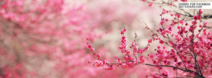 pink flowers facebook covers | timeline covers