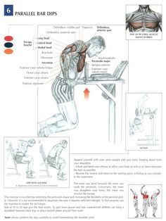 Parallel bar dips - chest and arms excersise ~ Re-Pinned by Crossed Irons Fitness