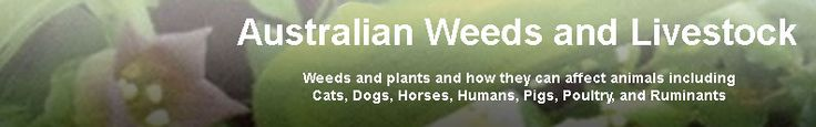 Australian Weeds and Livestock: loooooong list of plants that are toxic to ruminants (including sheep! ).