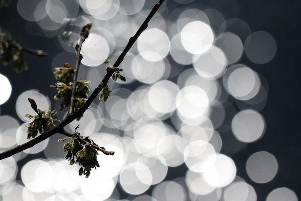7 Suggerimenti rapidi per creare Bokeh (luci sfocate disfondi) con fotocamera digitale