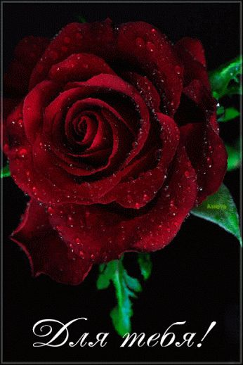 rosas rojas hermosas gif - Buscar con Google