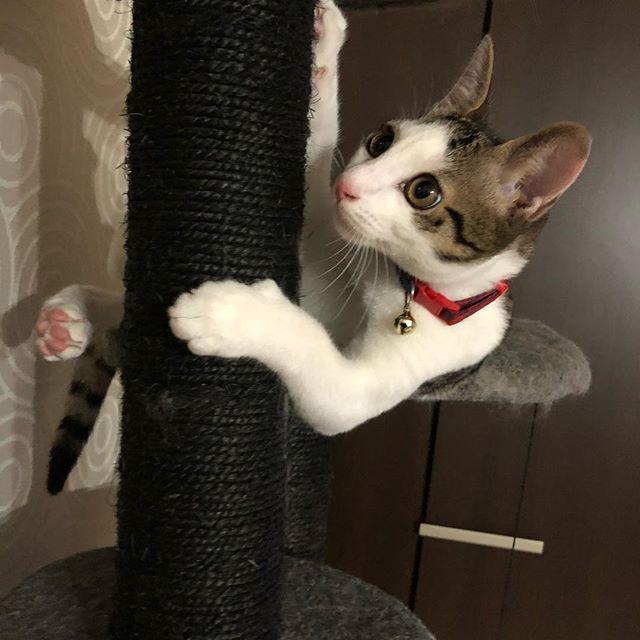 #ねぇ#どうゆう#状況#?#大吉#だいちゃん#だい#子猫#捨て猫#愛猫#癒し#キャットタワー#catstagram #instacat