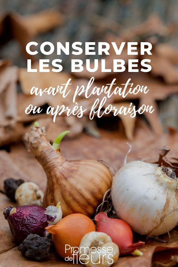 Comment Conserver Les Bulbes Avant Et Apres Floraison Bulbes