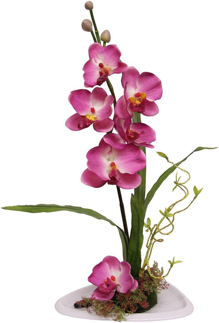 ber ideen zu orchideen pflege auf pinterest. Black Bedroom Furniture Sets. Home Design Ideas
