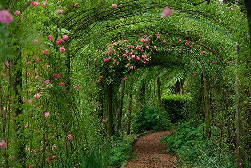 Meander thru the living green ~
